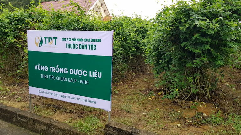 Hình ảnh vườn dược liệu Đông y tại Chí Linh - Hải Dương của Trung tâm Thuốc dân tộc