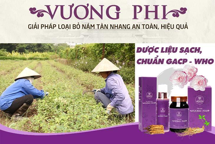 Dược liệu bào chế nên Vương Phi đảm bảo về chất lượng và nguồn gốc