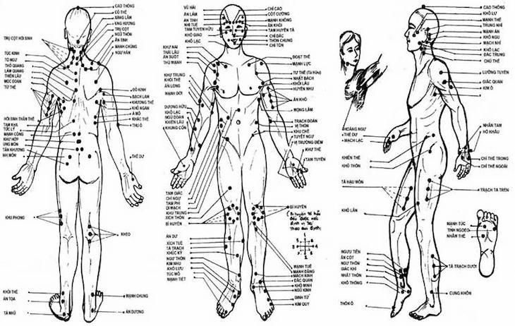 Hệ thống huyệt đạo có vai trò vô cùng quan trọng trong điều hòa chức năng cơ thể