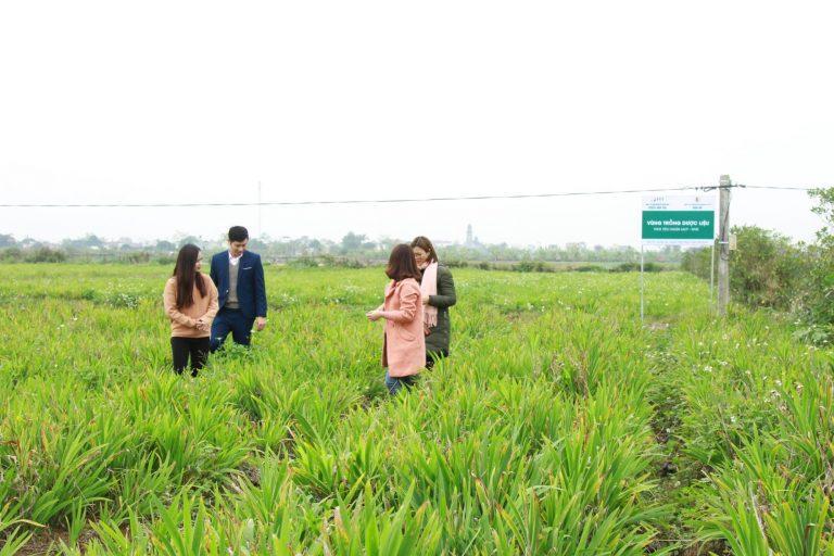 Vùng trồng dược liệu củ trung tâm Da Liễu Đông y Việt Nam tại Chí Linh – Hải Dương