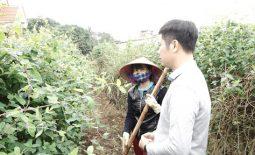phat-trien-vung-duoc-lieu