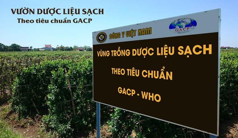 Toàn bộ thảo dược của bài thuốc được thu hái tại các vườn trồng đạt tiêu chuẩn GACP - WHO