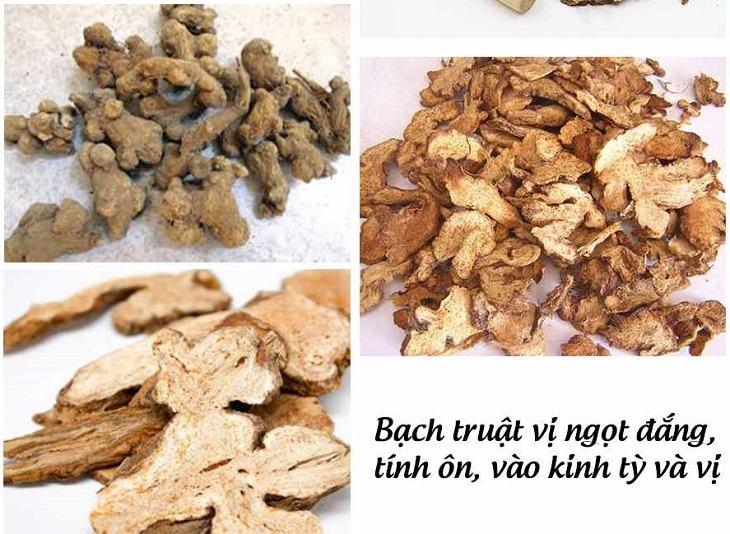 Bạch truật là vị thuốc Đông y có nhiều công dụng chữa bệnh