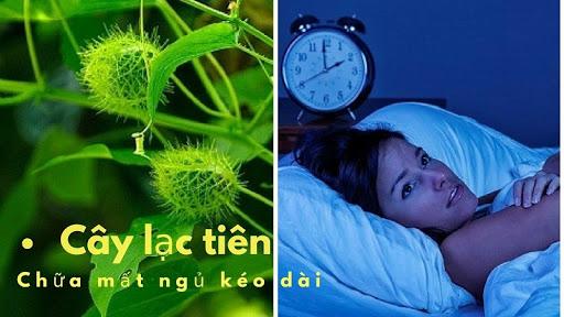 Cây lạc tiên có hiệu quả tốt trong việc cải thiện chứng mất ngủ