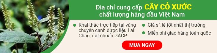 Cây cỏ xước Vietfarm chất lượng cao đạt chuẩn GACP