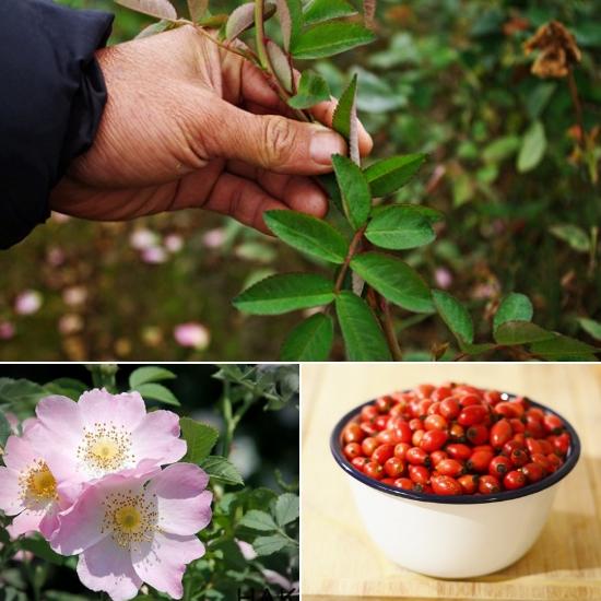 Các đặc điểm nhận dạng về lá, hoa và quả