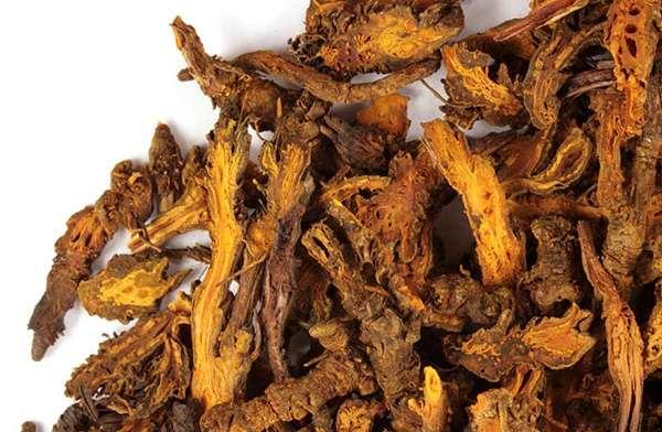 Sử dụng rễ cây hoàng liên điều trị các bệnh về nóng trong