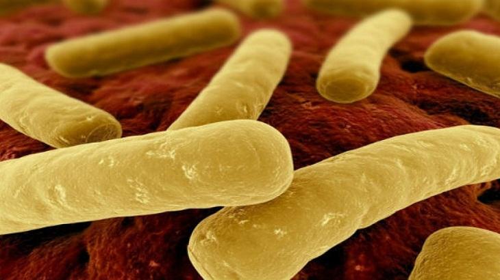Vi khuẩn C. difficile gây ra tình trạng đại tràng bị viêm giả mạc