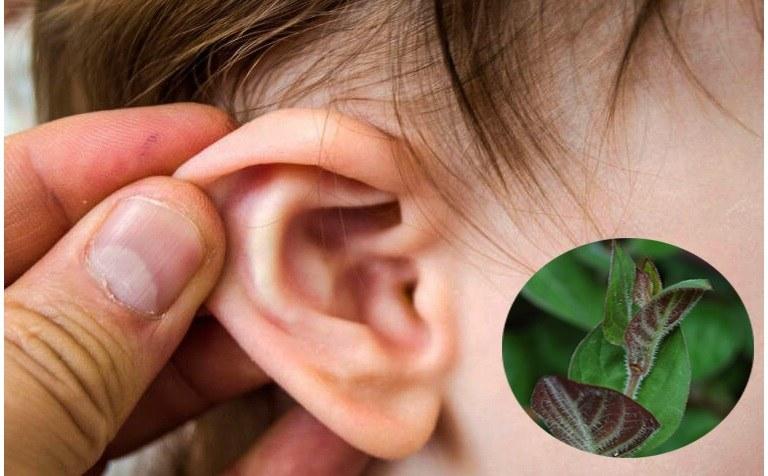 chữa viêm tai giữa tại nhà