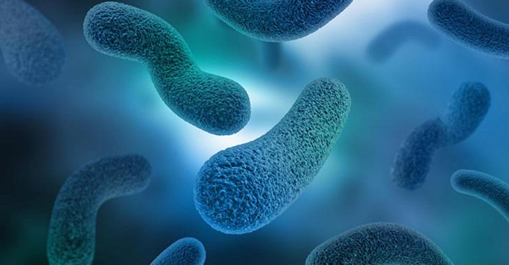 Vi khuẩn virus là nguyên nhân chính gây bệnh