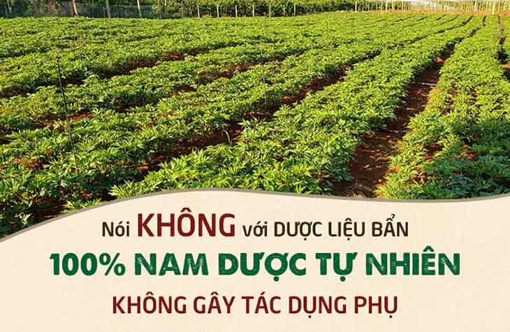 Trung tâm Đông y Việt Nam phát triển vườn dược liệu sạch
