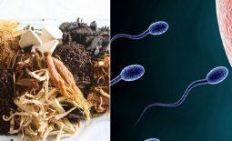 Top 9 bài thuốc chữa tinh trùng yếu bằng đông y [ĐẢM BẢO HIỆU QUẢ]
