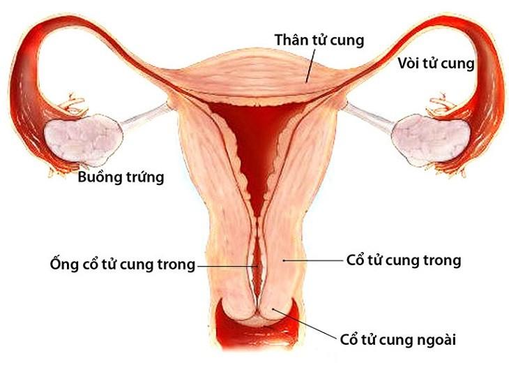 Viêm phần phụ là viêm nhiễm tại buồng trứng, vòi trứng, dây chằng rộng