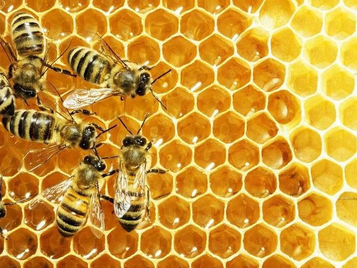 Cách trị ngứa da mặt tại nhà bằng mật ong
