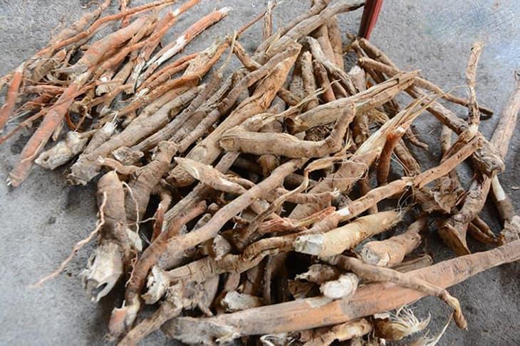 Dùng rễ cau để làm thuốc nam chữa rối loạn cương dương