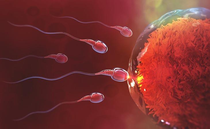 Tinh trùng bất thường sẽ ảnh hưởng đến sức khỏe sinh sản của nam giới