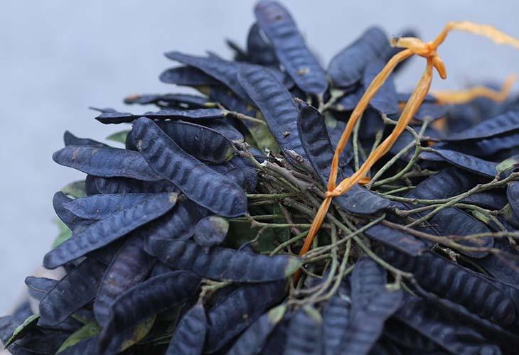 Bồ kết có tác dụng chống viêm, chống nhiễm khuẩn