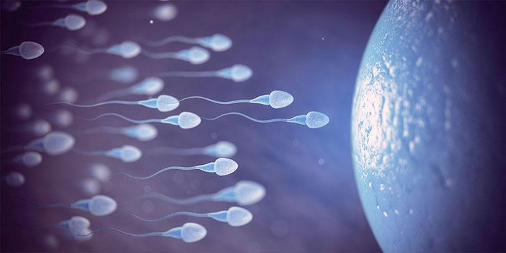 Xuất tinh ảnh hưởng trực tiếp tới quá trình thụ thai