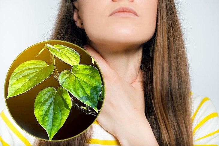 Có thể sử dụng lá trầu không và dầu mù tạt trị dứt điểm chứng viêm họng