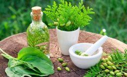 15 Cây thuốc chữa dạ dày hiệu quả - Công dụng và cách thực hiện tại nhà
