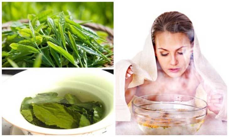 Cây trà xanh có catechin làm tăng công dụng của việc xông chữa viêm xoang.