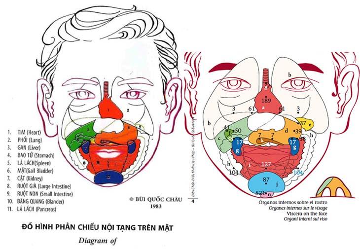 Đồ hình phản chiếu nội tạng trên mặt theo diện chẩn