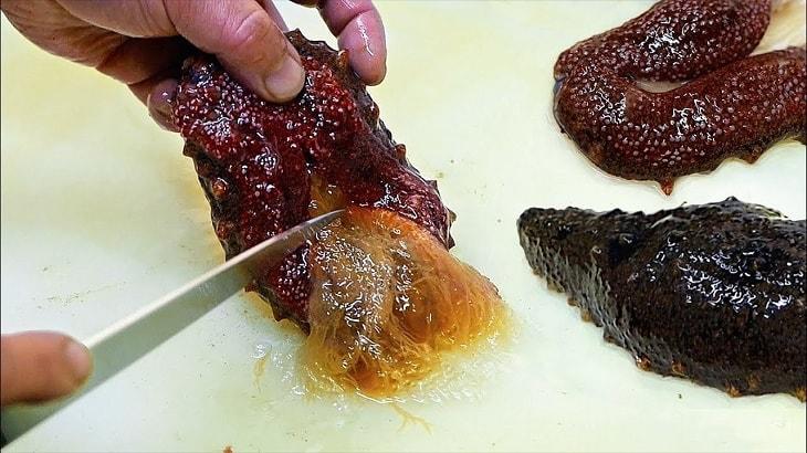 Dưa chuột biển còn gọi là hải sâm hay con rum