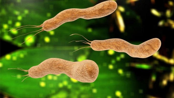 Dùng thuốc nam chữa vi khuẩn HP là một lựa chọn an toàn