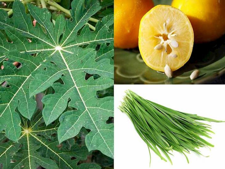 Kết hợp với lá hẹ và hạt chanh giúp giảm nhanh các triệu chứng bệnh bệnh