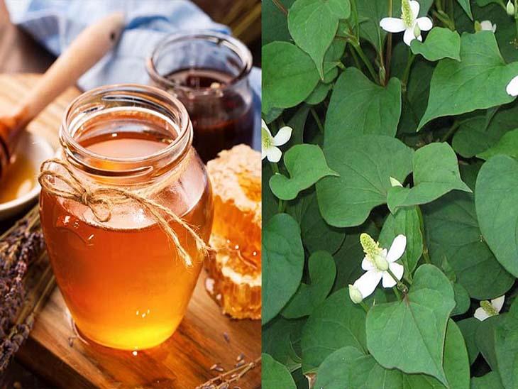 Chữa viêm họng bằng rau diếp cá và mật ong sẽ gia tăng gấp đôi tác dụng