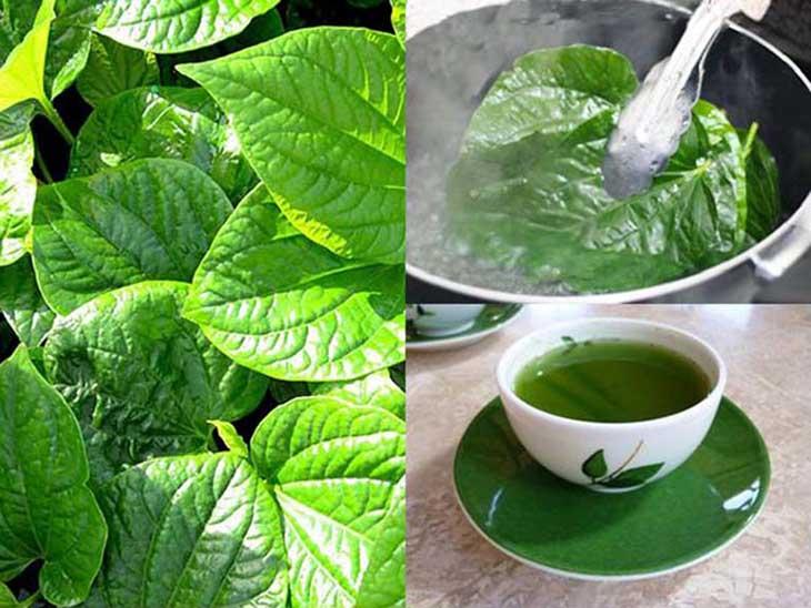 Nước sắc lá lốt chữa viêm mũi dị ứng và cải thiện hệ tiêu hóa