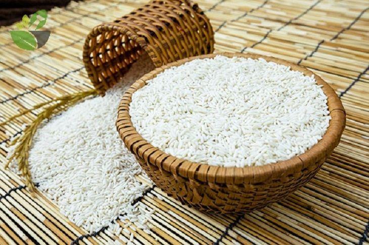 Đau dạ dày nên ăn gạo nếp nấu cùng mai mực