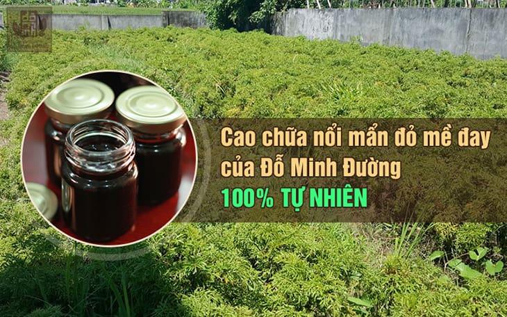 Nhà thuốc Đỗ Minh Đường phát triển dược liệu sạch