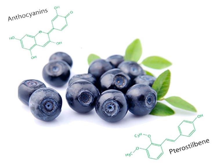 Hoạt chất Anthocyanin trong quả việt quất kích thích dẫn truyền tế bào thần kinh