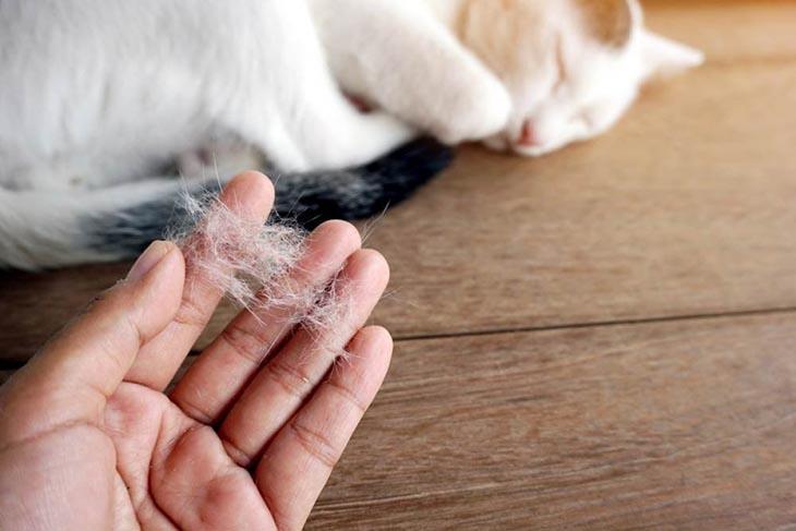 Lông động vật là tác nhân gây ra viêm mũi dị ứng, hạn chế tiếp xúc với chúng