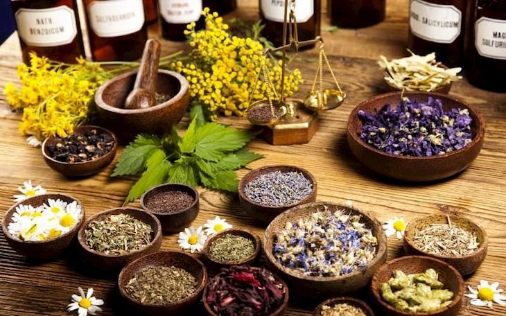 Các vị thuốc Đông y có tác dụng giảm nhanh các triệu chứng viêm họng mãn tính