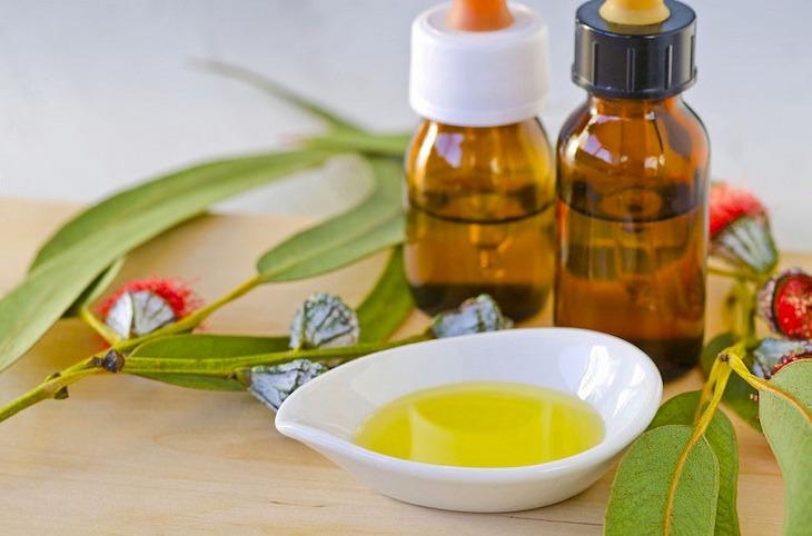 Xông hơi tinh dầu khuynh diệp là giải pháp điều trị bệnh tại nhà rất hiệu quả