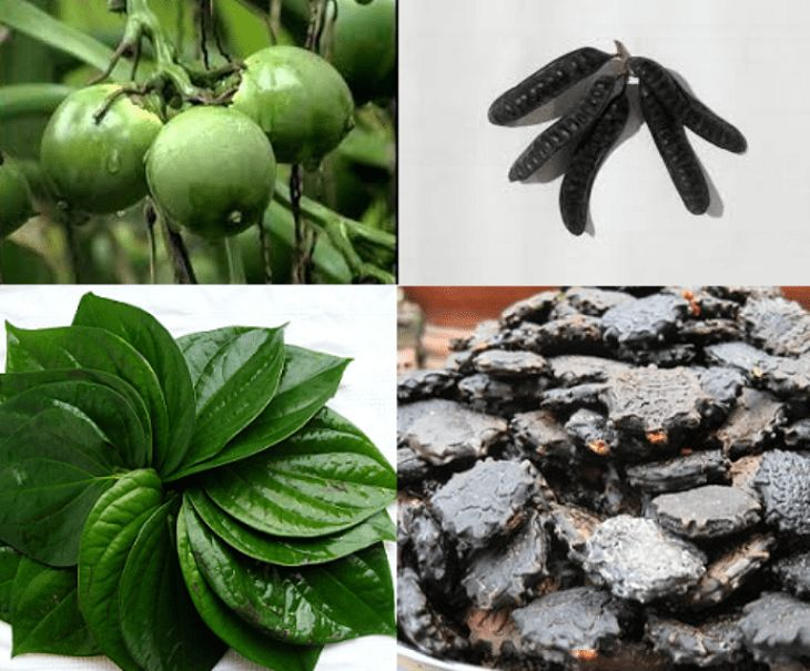 Bài thuốc trị bệnh trĩ từ xông hơi lá trầu không cùng quả câu, hạt gấc, quả bồ kết