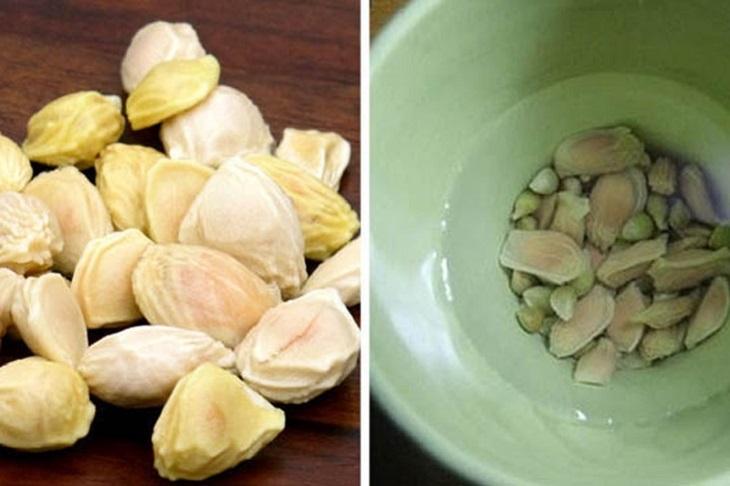 Hạt bưởi chứa nhiều hoạt chất tốt cho người bệnh