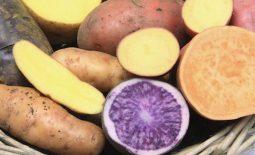 Đau dạ dày có nên ăn khoai lang - Ăn cần lưu ý những gì?