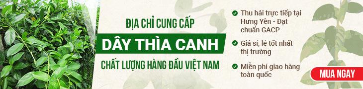 Dây thìa canh Vietfarm đạt chuẩn GACP chất lượng cao