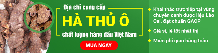 Hà thủ ô Vietfarm cao cấp đạt chuẩn chất lượng GACP