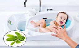 Lá chè xanh có nhiều tác dụng kháng khuẩn, tiêu viêm đối với bệnh nhân bị viêm da cơ địa