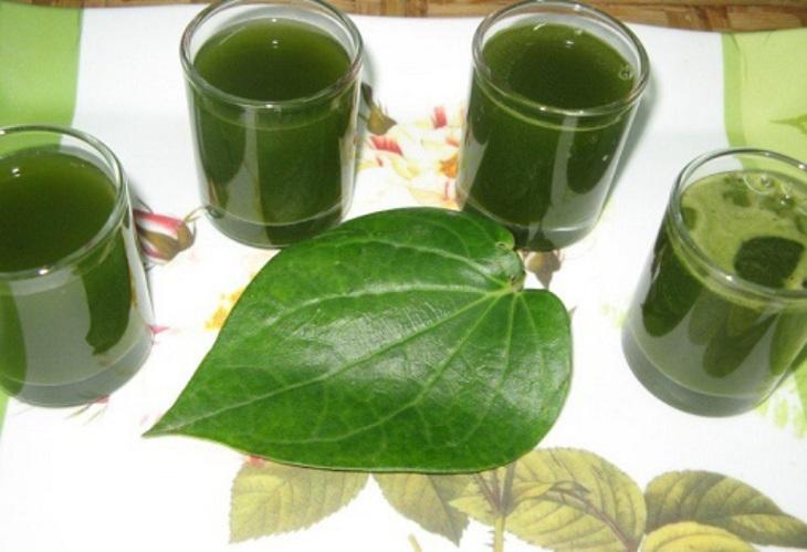 Uống nước lá trầu không giúp trị viêm da cơ địa từ bên trong