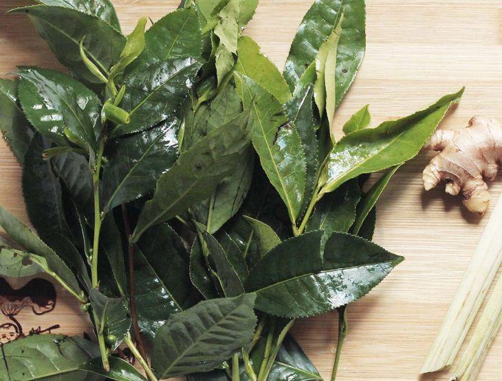 Dùng nước trà xanh để tắm đẩy lùi các triệu chứng bệnh