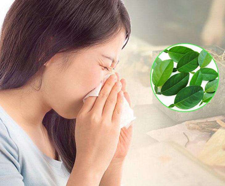 Lá chanh chữa viêm xoang hàm, viêm xoang mũi rất nhạy