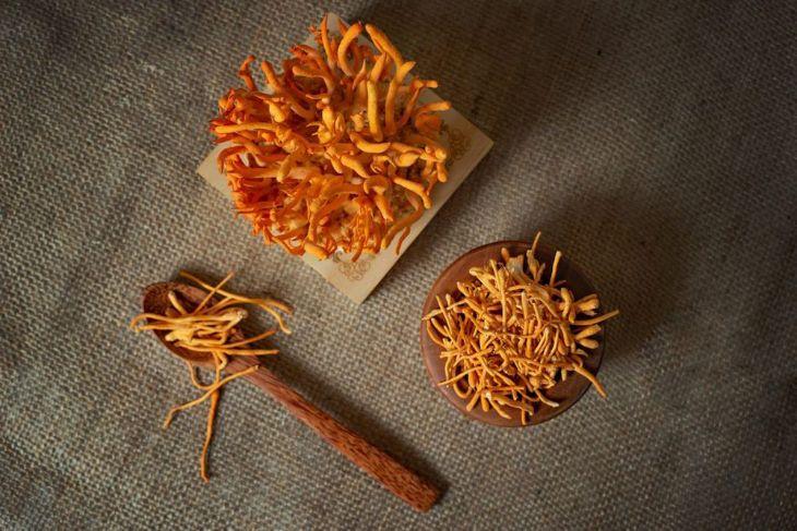 Đông trùng hạ thảo giá bao nhiêu tùy thuộc vào loại sản phẩm