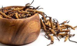 Đông trùng hạ thảo nguyên con có gì đặc biệt, dùng thế nào, giá cả ra sao?