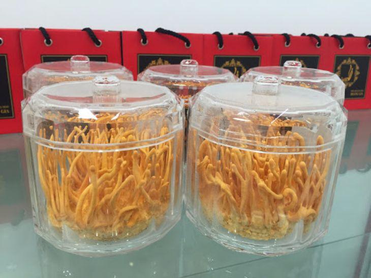 Trùng thảo nuôi cấy chứa hàm lượng dưỡng chất rất tốt cho sức khỏe