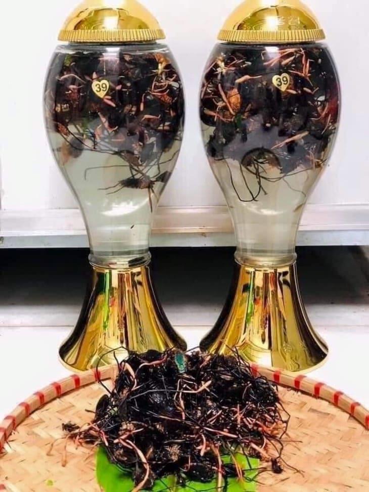 Rượu đông trùng bọ xít – Sản phẩm được nhiều người tin dùng và săn đón